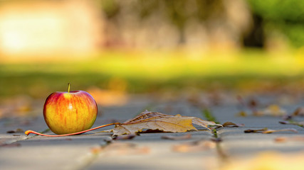 Footpath brick blocks with red apple and autumn leaves, the beautiful pathway  in the public park in the morning - image