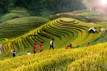 Keuken foto achterwand Rijstvelden Rice fields on terraced of Mu Cang Chai, YenBai, Vietnam. Vietnam landscapes.
