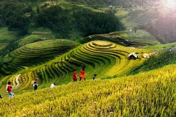 Rice fields on terraced of Mu Cang Chai, YenBai, Vietnam. Vietnam landscapes. Fototapete