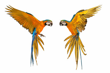 Printed roller blinds Bird Colorful flying parrots isolated on white background.