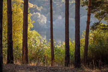Fototapete - Beautiful view of the lake through the trees and bushes. Beautiful landscape.