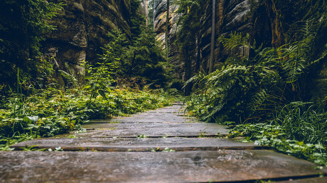 Wooden path in a dark forest after rain