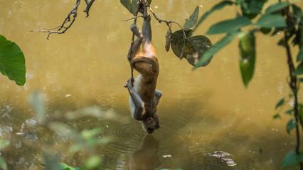 Monkeys in the wild in Myanmar