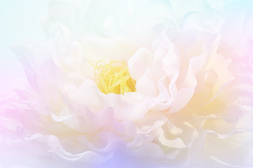 Beautiful peony flower design background