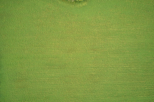 Aerial view of a grass plantation. Grass meadows top view.