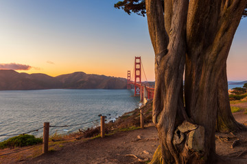 Golden Gate Bridge in San Francisco, California, USA at sunset, as seen from behind some trees in a park nearby