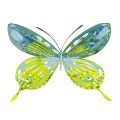 watercolor green butterfly