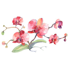 Branch of red orchids floral botanical flowers. Watercolor background set. Isolated bouquets illustration element.