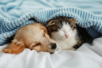 Adorable little kitten and puppy sleeping on bed