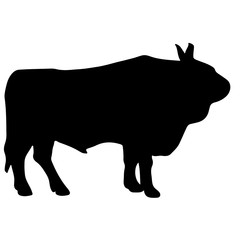 Silhouette of a black bull angus