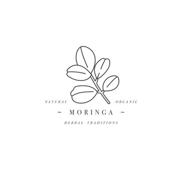 Vector design element and icon in linear style - moringa - healthy eco food. Organic ingredient. Detox supplements. Logo sign.