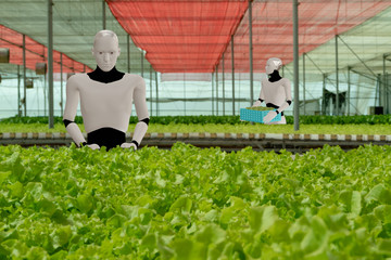 Wall Mural - 3d rendering ai artificial intelligent robot work in smart farm, agriculture concept, robot work for increase productivity, efficiency, speed, time,