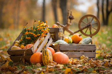 Autumn decor in the garden. Pumpkins and vegetable marrows lying in wooden box on autumn background.  Autumn time. Thanksgiving Day.