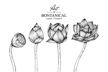 Sketch Floral Botany Collection. Lotus flower drawings. Black and white with line art on white backgrounds. Hand Drawn Botanical Illustrations.Vector.