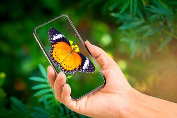 Hand holding mobile phone and take a photo butterfly on blurred background with sunlight