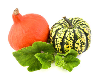 Fresh pumpkin vegetable with green leaves  isolated on white background. Hokaido and sweet dumpling squash.