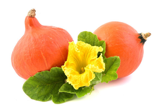 Fresh pumpkin vegetable with green leaves and flower isolated on white background. Hokaido squash.