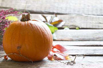 Autumn pumpkin on wooden boards background