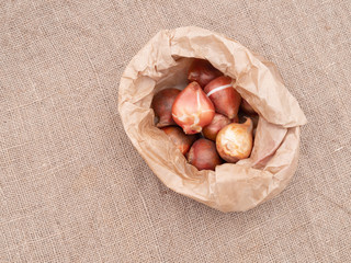 Brown paper bag of assorted tulip bulbs on hessian, burlap fabric with copyspace. Overhead view.