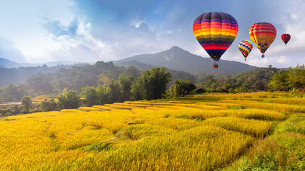 Zelfklevend Fotobehang Ballon Hot air balloon over the yellow terraced rice field in harvest season .