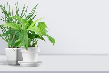 Poster Planten Plant.