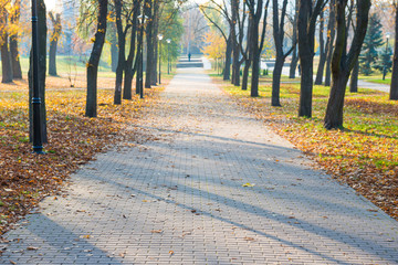 Alley with fallen leaves in autumn city park
