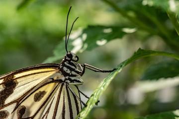Butterfly on a garden, Taiwan
