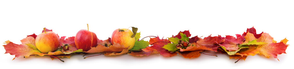 Autumn background with red apples and colorful leaves isolated on white.