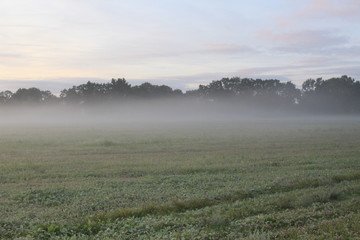 Spoed Foto op Canvas Khaki Sunrise in the fog over forest and meadow