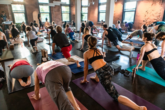 Diverse group of people in yoga class. A high angled shot on a large group of mixed people on exercise mats during a workshop teaching 108 salutations to the sun.