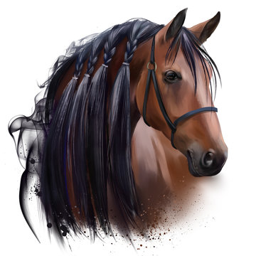 The horse's head. Watercolor drawing