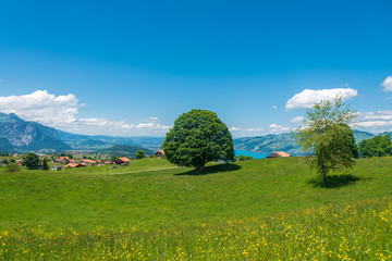 Landscape in Aeschi bei Spiez with a view of Lake Thun