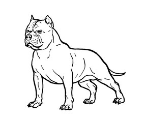 Hand drawn sketch of american bully. Graphical dog isolated on white background. Illustration for tattoo and printing.