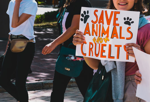 "The word "" Save animals from cruelty "" drawn on a carton banner in woman's hand. Human holds a cardboard with an inscription. Animal Right March. Protest. Rally. Marching"