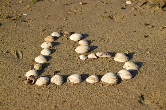 Serce z muszelek na plaży