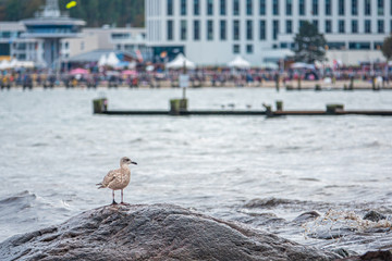 a seagull sitting on a stone in the bay of Travemünde in cloudy autumn weather