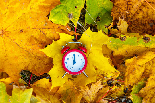 Old clock on autumn leaves on natural background
