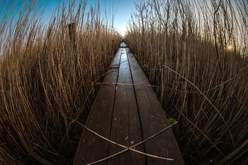 Schmaler Holzsteg durch Schilf an einem See im Morgen