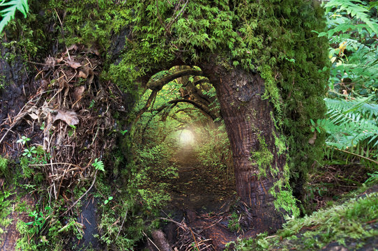 Ancient mossy tree with open doorway and fairy light