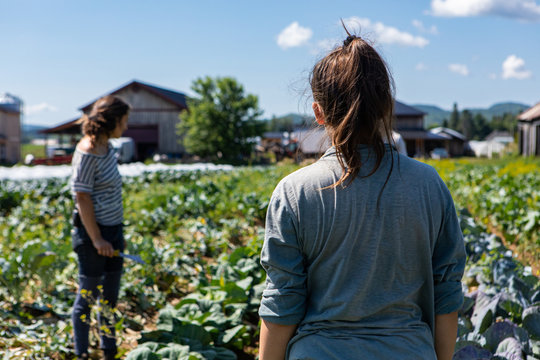 Farmhands tend crops at ecological farm. Two farm helpers are seen from behind, checking the condition of crops on rural farmland against a blue sky with room for copy.