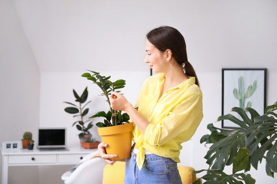 Young woman with beautiful houseplant in pot at home