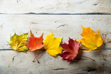 Bright autumn leaves on the white rustic desk Wall mural