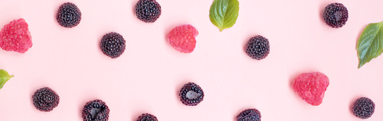 Summer berries black and red raspberries are sprinkled on a pink background.Top view,banner.