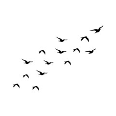 Flock of Birds silhouette isolated on white background