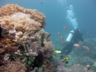 shot of a scuba diver wearing diving suit, fins and equipment swimming near coral reefs and fish Wall mural