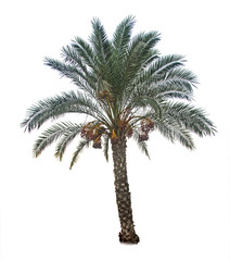Fotobehang Palm boom Close up of Date palm