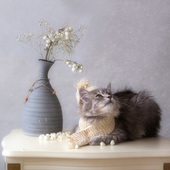 Portrait of adorable gray kitty in winter knitted hat