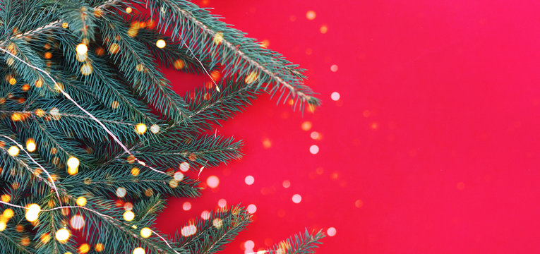 Sprigs of a Christmas tree with a garland and lights on a red background.