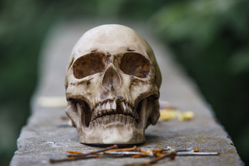 The skull of a man lies on a stone fence, close-up. Horrors in an abandoned house on Halloween