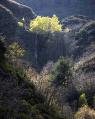 Wall Murals Deep brown Birch Forest on top of a Cliff with a Waterfall